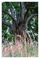 Baum-fertig-neu2
